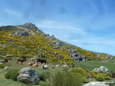 Reserva Natural Valle Iruelas-Pozo de la nieve;nacimiento urederra puente de la inmaculada viajar so